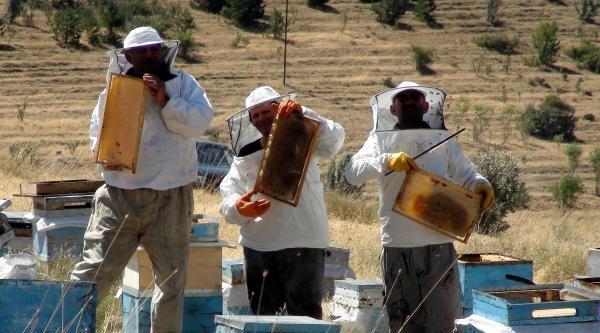 Yozgat'ta 21 Bin Kovanda 400 Ton Bal Üretimi