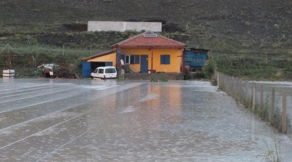 Yozgat'ta Doyu Yağışı Hububat Ekili Alanlara Zarar Verdi