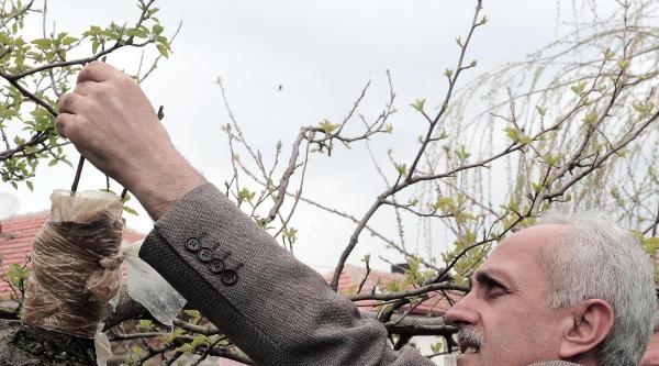 Yozgat'ta Organik Tarıma Eğitim Desteği