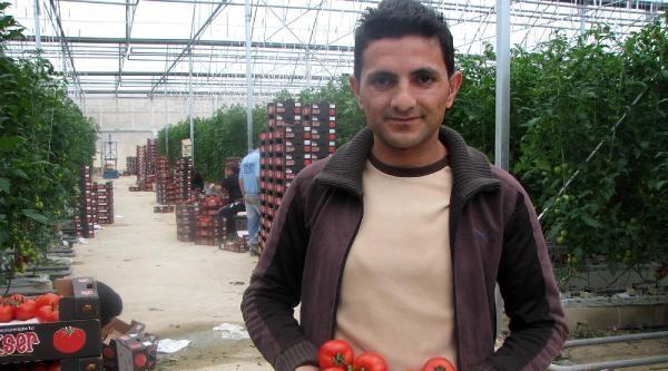 Yozgat'tan Büyük Şehirlere Hormonsuz Domates