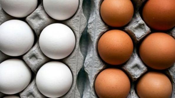 Yumurtadaki büyük hile!