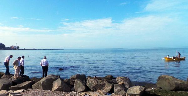 Yunuslar Kıyıya Kadar Geldi