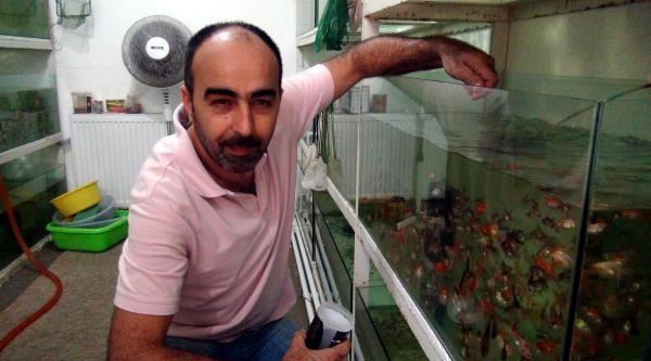 Zevk İçin 10 Bin Akvaryum Balığı Besliyor