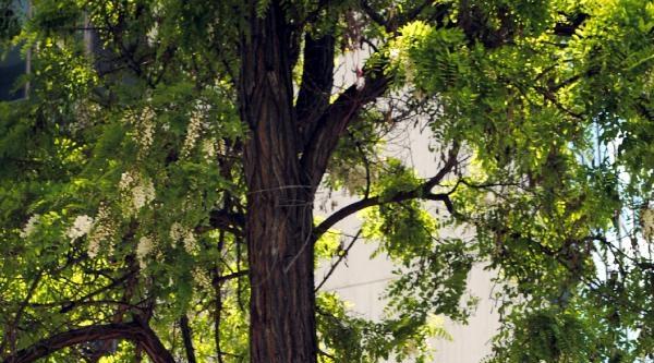 Zihinsel Engelli Kadın Çiktiği Ağaçtan Düştü