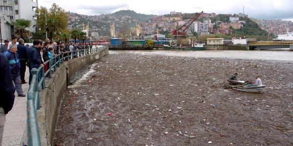 Zonguldak Limani'ndaki Odunlari Balikçilar Topladi