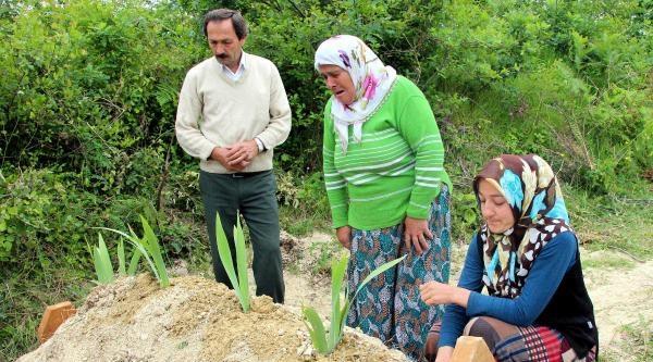 Zonguldaklı Madenci, Soma'da İşe Başladığının 5'inci Gününde Can Verdi