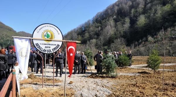 Zonguldak'ta Cumhurbaşkanı Abdullah Gül Ormanı Oluşturuldu