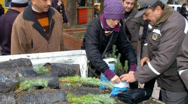 Zonguldak'ta Ücretsiz Fistik Çami Fidani Dağitildi