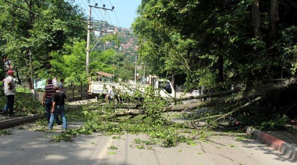 Zonguldak'ta Yola Devrilen Ağaç Ulaşımı Durdurdu