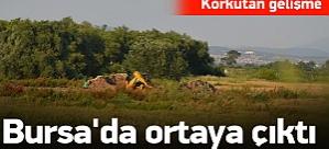 Kuş gribi bu kez de Bursa'ya sıçradı